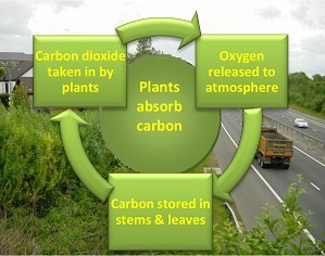 Plants absorb carbon